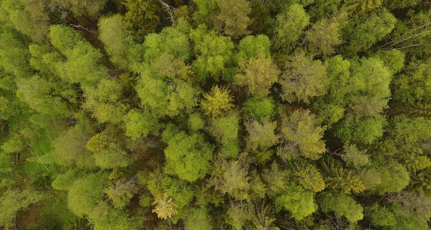 Kuidas toimub metsamaa müük?