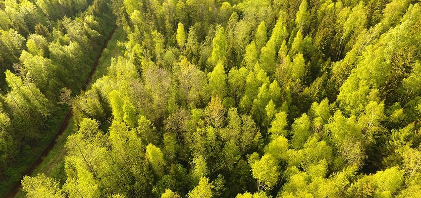 Metsandus ja metsamaa müül