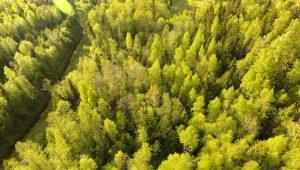 Passiivsest metsaomanikust teadlikuks metsamajandajaks