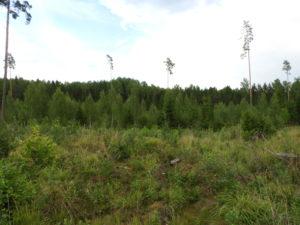Juuli 2018 metsandussektoris – metsade mõju kliimale ja muutused puiduturus