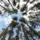 August 2018 metsandussektoris – muutused puiduturul ning metsameeste-ja teadlaste arvamus metsandusest