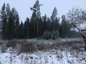 Detsember 2018 ja jaanuar 2019 metsanduses