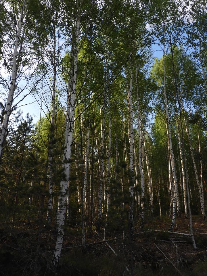 Mai ja juuni metsanduses