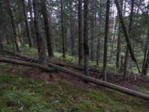 Juuli ja august metsanduses